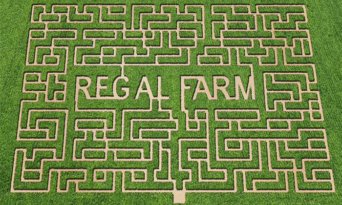 Regal Corn Maze - Statesville: Corn-Maze Admission for Two, or Admission and Activity Bracelets for Two at Regal Corn Maze (Up to 46% Off)