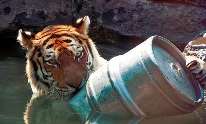 Zoo Brew at Blank Park Zoo (Up to 58% Off). Four Options Available.