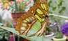 Newport Butterfly Farm - Tiverton: Visit for Two or Up to Four to Newport Butterfly Farm (Up to 50% Off)