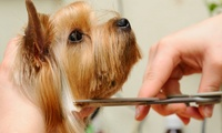 Dog Grooming Services at The Dog Lounge (Up to 71% Off)