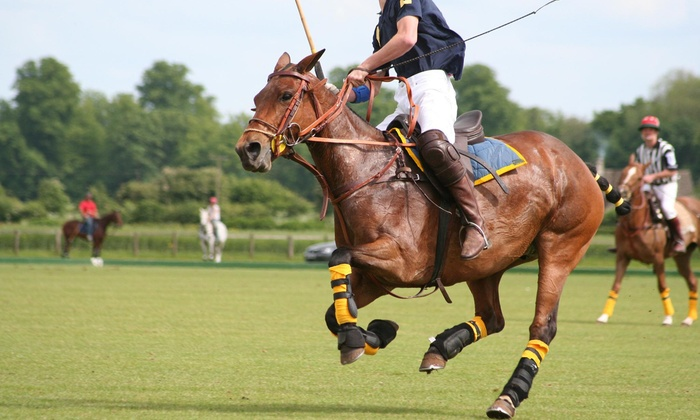 Detroit Polo School - Howell: One-Day Polo Lesson from Detroit Polo Club (44% Off)