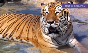 Lions Tigers & Bears: Feed a Big-Cat- or Bear-Feeding Experience for One or Two on a Saturday at Lions Tigers & Bears (Up to 33% Off)