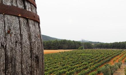 Cata de vino y embutidos para 2 o 4, visita a bodegas y viñas y opción a botella de vino desde 9,95€ en Bodegas Rebollar