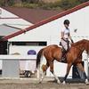 Up to 46% Off Horseback Riding at Bay Light Farm