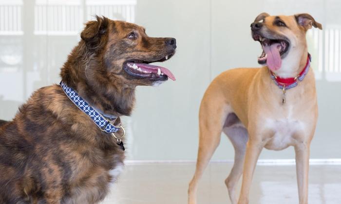 Found Animals Adopt & Shop - Culver City : Up to 56% Off Pet daycare at Found Animals Adopt & Shop