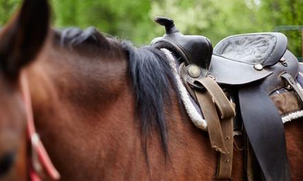3, 5 o 8 lezioni di equitazione
