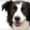 Up to 57% Off Dog Boarding