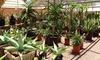 Up to 51% Off Desert Plants & Garden Accessories