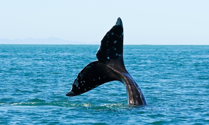 All Season Charters - Edmonds: Puget Sound Whale-Watching Tour for One, Two, Four, or Up to 10 from All Season Charters (Up to 52% Off)