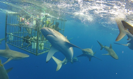 Two-Hour Shark Cage-Dive Tour for One, Two, or Four People from North Shore Shark Adventures (Up to 20% Off)