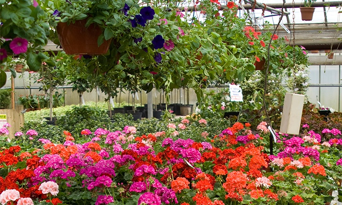 Harper's Nursery & Landscape Co - Mesa: $20 for $50 Worth of Plants, Flowers, and Shrubs at Harper's Nursery & Landscape Co - Mesa Location