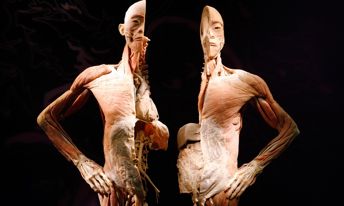 "Bodies: The Exhibition - Atlantic Station: ""Bodies: The Exhibition"" at Atlantic Station through July 31 (Up to 42% Off)"