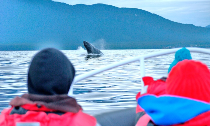 SpyHop Ocean Adventures - Ucluelet: Whale Watching Tour for Two or Four at SpyHop Ocean Adventures (Up to 51% Off)
