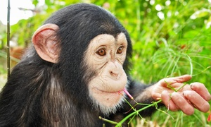 Suncoast Primate Sanctuary: Monkey-Feeding Experience for Two or Four at Suncoast Primate Sanctuary (Up to 57% Off)