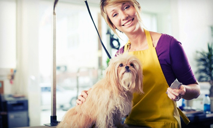 Pipsqueeks Pets - Belleview: Complete Dog Grooming for a Small or Medium Dog or for a Large or Extra-Large Dog at Pipsqueeks Pets (Half Off)