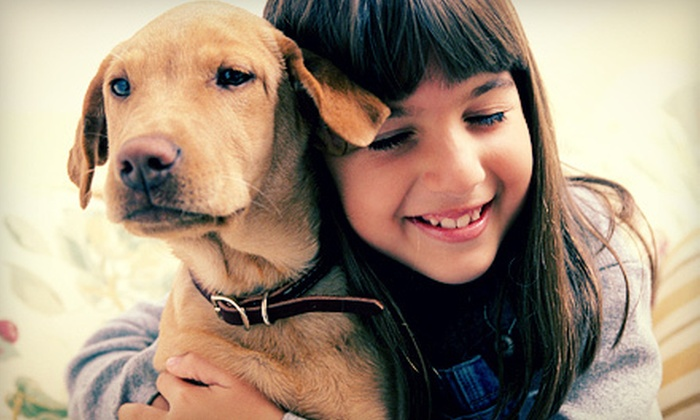 Man's Best Friend - Houston: Three or Five Nights of Dog Boarding and Daycare at Man's Best Friend (Up to 69% Off)