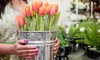 Portland Trolley - Oregon Wine Garden: $16 for Transportation and Admission to Tulip Fest from Portland Trolley ($38 Value)