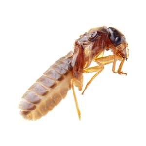 Pest-Control Treatment with Termite Monitoring System from Arrow Pest Control (55% Off)