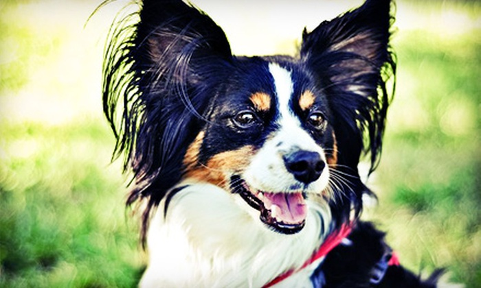 Downtown Doggie - Downtown Indianapolis: Three Nights of Dog Boarding or Two Days of Daycare at Downtown Doggie (Up to 52% Off)