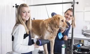Holly and Hugo: Formation pour apprendre à toiletter son chien comme un professionnel avec Holly and Hugo dès 19 €