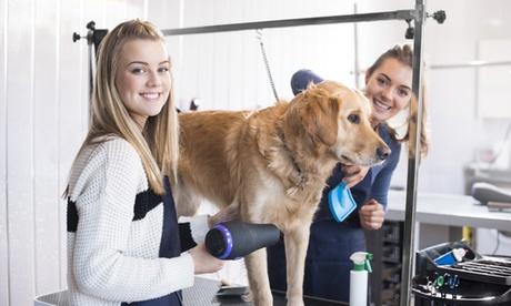 Opleiding om je hond te leren trimmen zoals een professional met Holly and Hugo vanaf €...