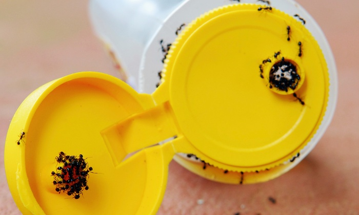 Hydrex Pest Control - Bakersfield: $50 for Interior and Exterior Insect-Control Treatment from Hydrex Pest Control ($175 Value)