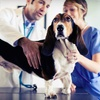 Up to 62% Off Pet-Care Services