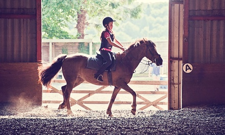 One or Two 30Minute Private Horse Riding Lessons at Shedfield Riding School