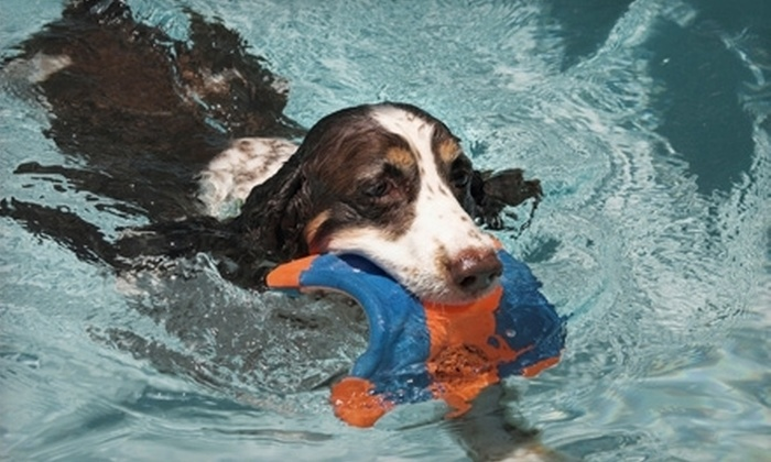 SpawZ Dog - North College Park: One or Three Private Dog-Swim Sessions at SpawZ Dog (Up to 58% Off)