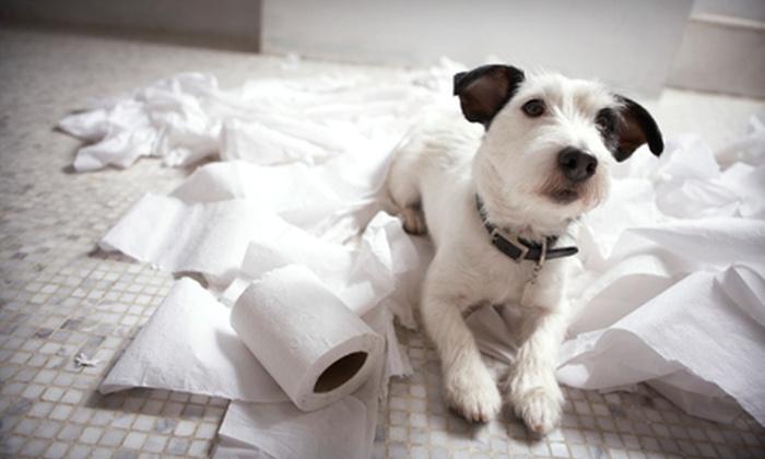 Good Dog - Ottawa: One Private Dog-Training Session or Four Group Dog-Training Sessions from Good Dog (Up to 56% Off)
