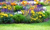 The Plant Place - Grand Chute: $20 for $40 Worth of Plants and Garden Accessories at The Plant Station Greenhouse Inc.