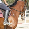 66% Off Horseback-Riding Lessons
