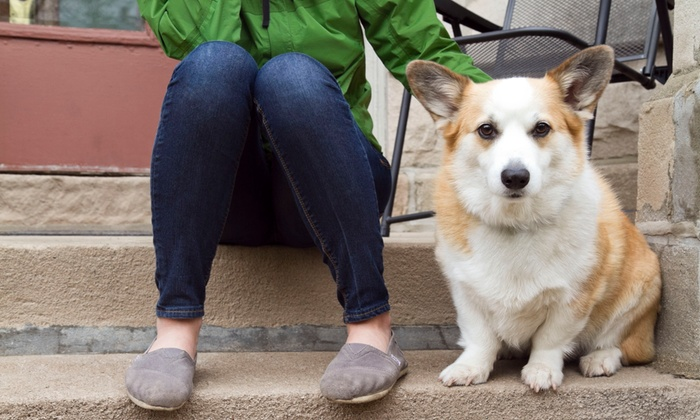 My Confident Canine - Ann Arbor: $250 for Five At-Home Dog-Training Sessions from My Confident Canine ($425 Value)
