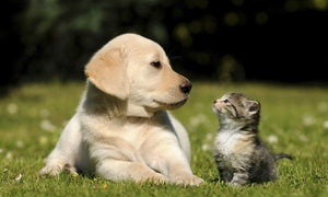 Animal Clinic of Miami Dade: Exam for a Cat or Dog or Annual Pet Checkup, or Dental Cleaning at Animal Clinic of Miami Dade (78% Off)