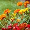 62% Off Weed Control Treatment