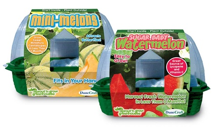 groupon daily deal - 2-Pack DuneCraft Sprout 'n' Grow Miniature-Melon Growing Kits. Free Returns.