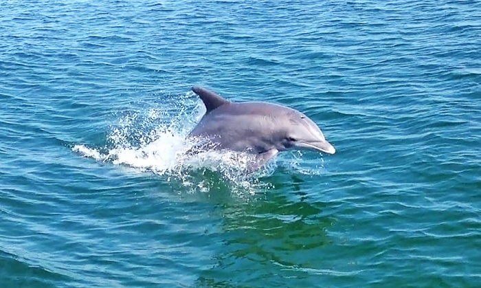 Premier Dolphin Cruise - Pensacola Beach Boardwalk: $35 for Dolphin or Sunset Cruise for Two from Premier Dolphin Cruise ($60 Value)