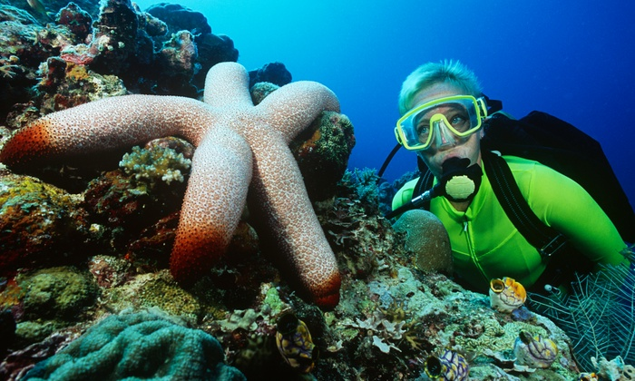 Blue Water Divers - Holiday Inn- Saddle Brook: $25 for Discover Scuba or Snorkeling Lesson at Blue Water Divers ($99 Value)