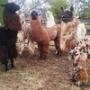25% Off a Llama Llesson