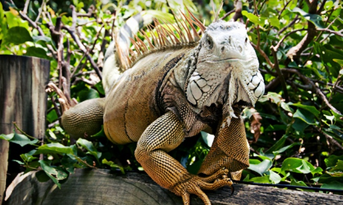 World of Discovery Reptile Zoo - Scio: $12 for a Family Zoo Outing for Four at World of Discovery Reptile Zoo (Up to $24 Value)