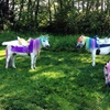 45% Off Party from Dreamland Ponies