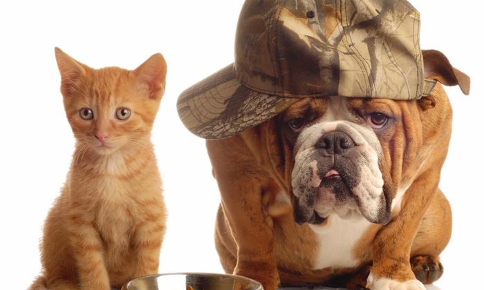Houston Dog Duty - Houston: $38 for $50 Groupon — Houston Dog Duty