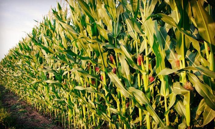 Keller's Farmstand Oswego - Oswego: Corn Maze for Two, Four, or Six at Keller's Farmstand Oswego (Half Off)