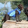 DockDogs Dog Wetsuits
