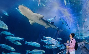 Up to 17% Off Admission to Aquarium of the Bay
