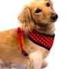 Robin Meyer NYC Dog Harness