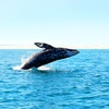 50% Off a Whale-Watching Tour