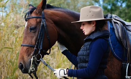 One or Three Horseback Riding Lessons at Winning Edge Training Center         (Up to 53% Off)