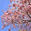 Up to 62% Off Landscaping Services or Tree Planting
