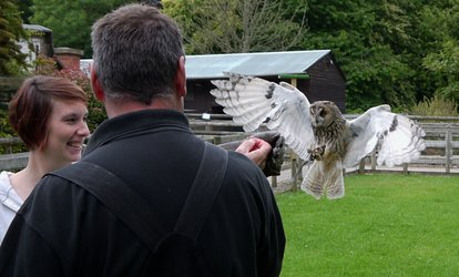 image for Three-Hour Birds of Prey Experience for One, Two, or a Family of Four at Hawksflight Falconry (Up to 77% Off)